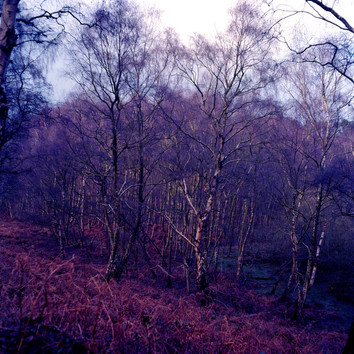 UK Forest