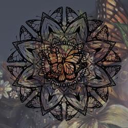 butterflymandalacolor