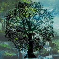 treemandalacolor