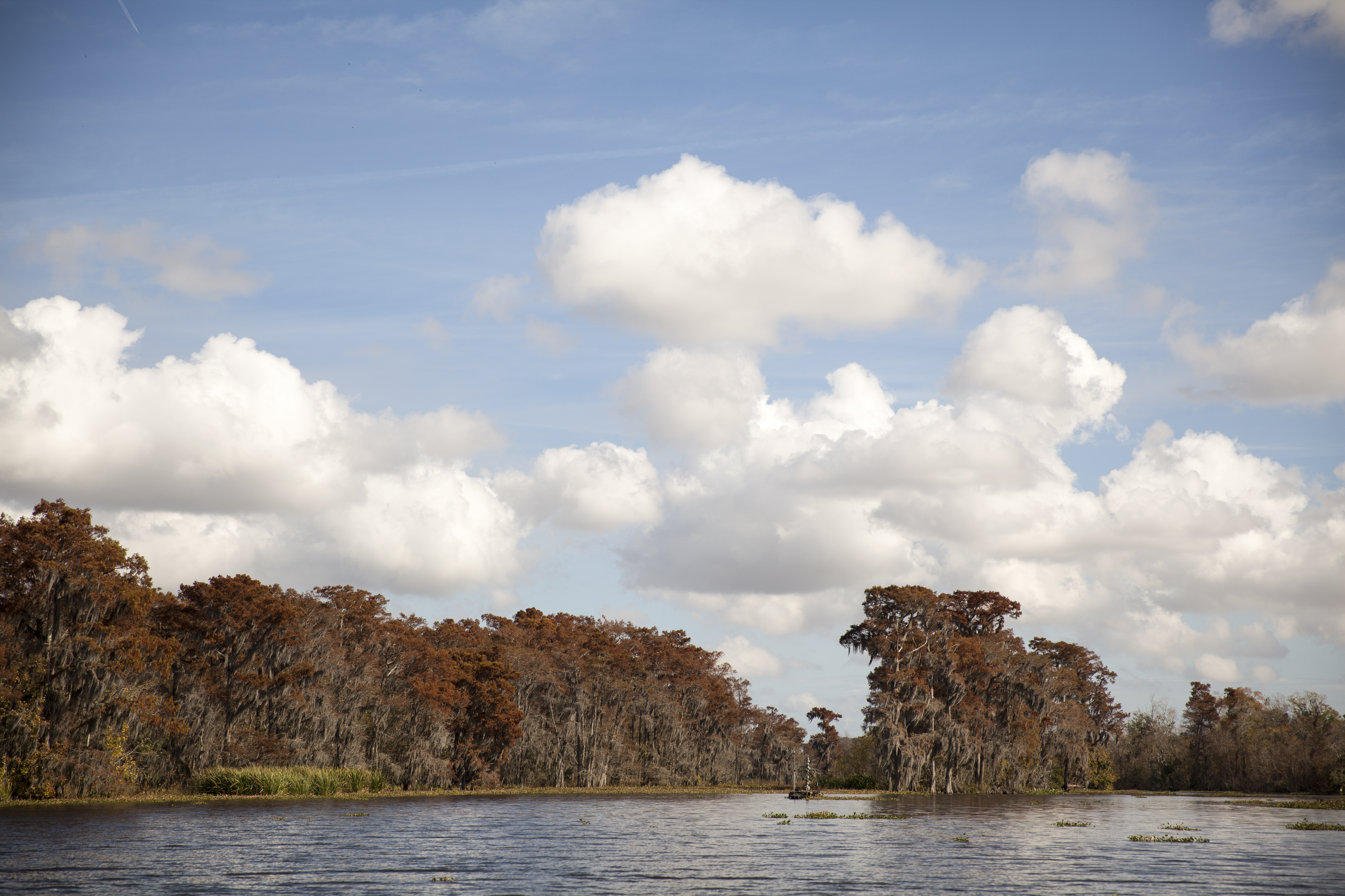 Swamp Clouds