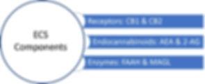 ECS components.jpg