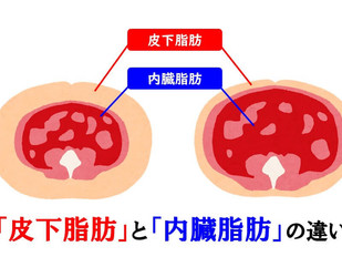 体につく脂肪の正体とその働き