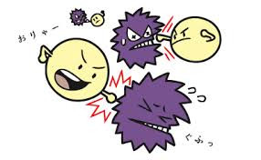 基礎代謝と免疫力