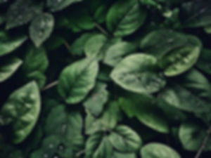 pexels-photo-807598.jpeg