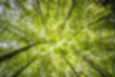 forest-trees-perspective-bright-957024.j