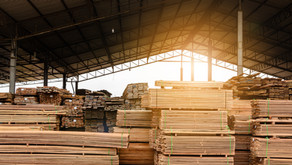 Don't cut down your retirement tree.  Lumber bubble blog: Natural resource