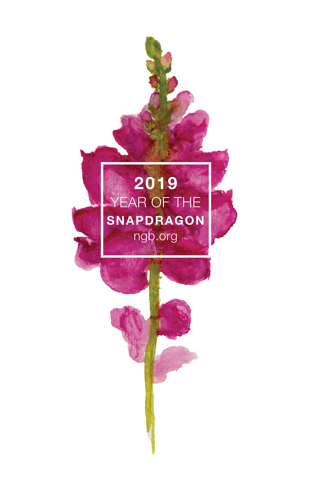 The National Garden Bureau has named 2019 The Year of the Snapdragon
