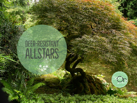 Deer-Resistant All-star Lineup