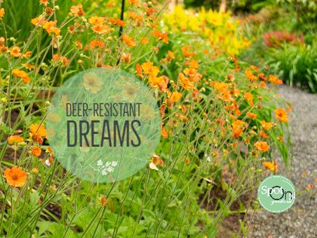 Deer-resistant Dreams