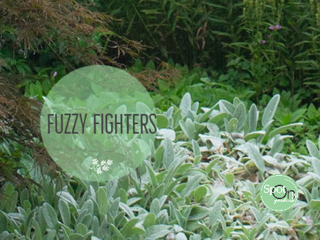 Fuzzy Fighters