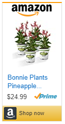 Buy pineapple sage salvia from Bonnie Plants