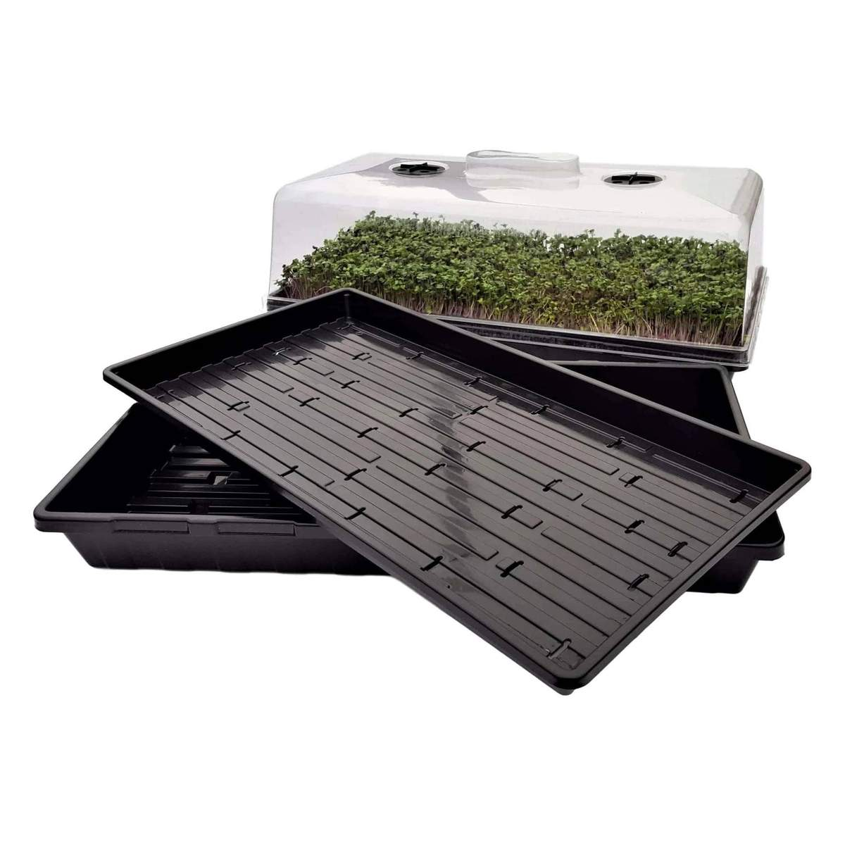 Microgreen Tray Grower Kit Bootstrap