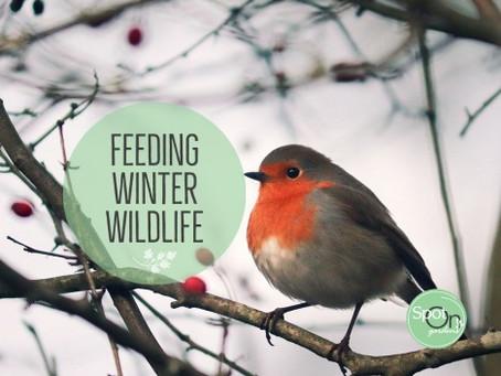 Deer-Resistant Plants for Winter Wildlife