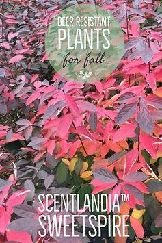 Blog-Salvia-Pin.png