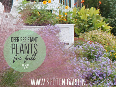 Fall for these deer-resistant plants