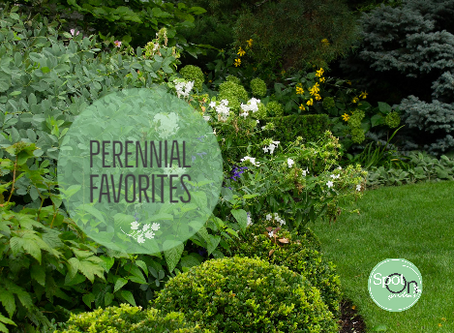 Perennial Favorites for Deer-Resistant Gardens