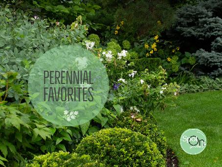 Perennial Favorites for Deer-Resistant Gardens