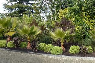 A round and fragrant evergreen shrub. Tolerant of salt.
