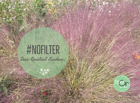 Muhly Grass for #NoFilter Picture-perfect Deer-Resistant Gardens