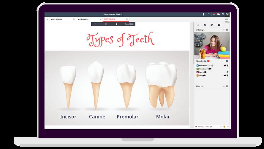 Types of Teeth.png