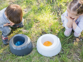 Potty train your little one in 3 easy steps