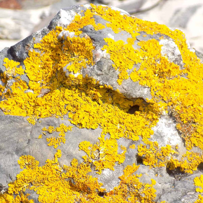 Vibrant beach rocks