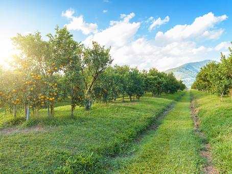 Nine Amazing Ways Density-Based Spraying Improves the Sustainability of Fruit and Nut Trees