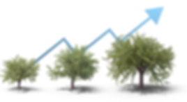 TREE-GROWTH-NEW-OPT_1.png