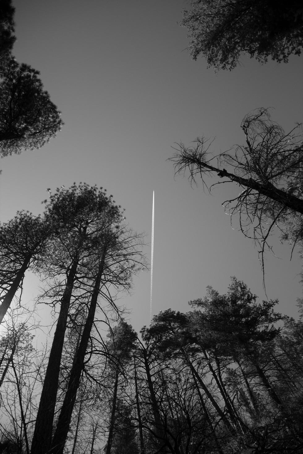 plane line through trees.jpg