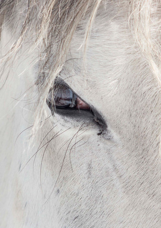 Window to the Soul