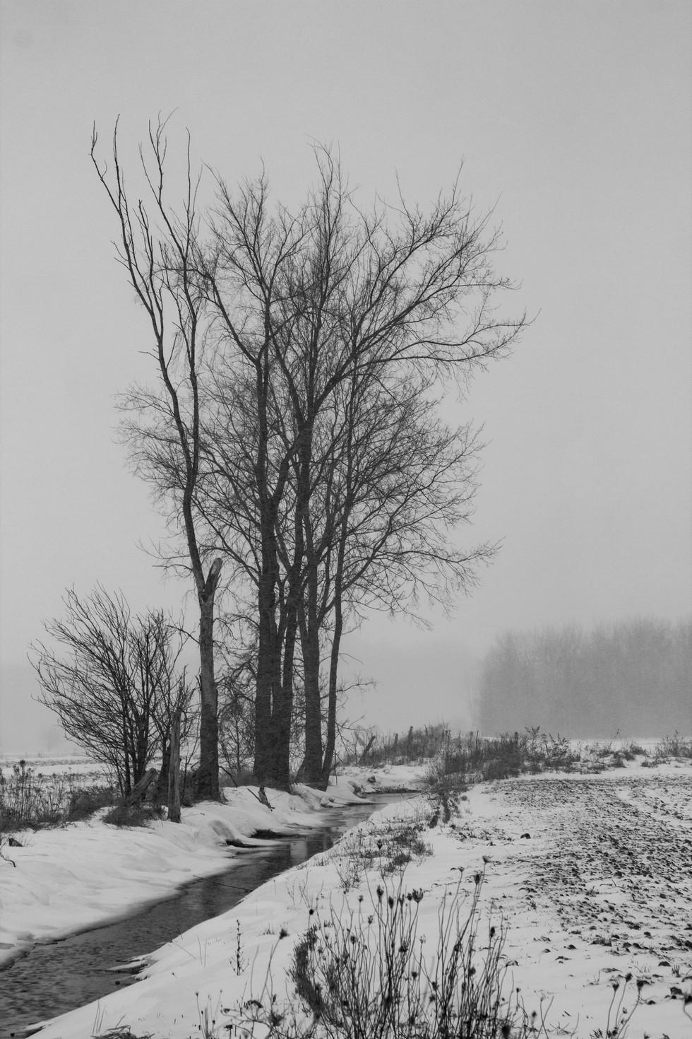 snowy day.jpg