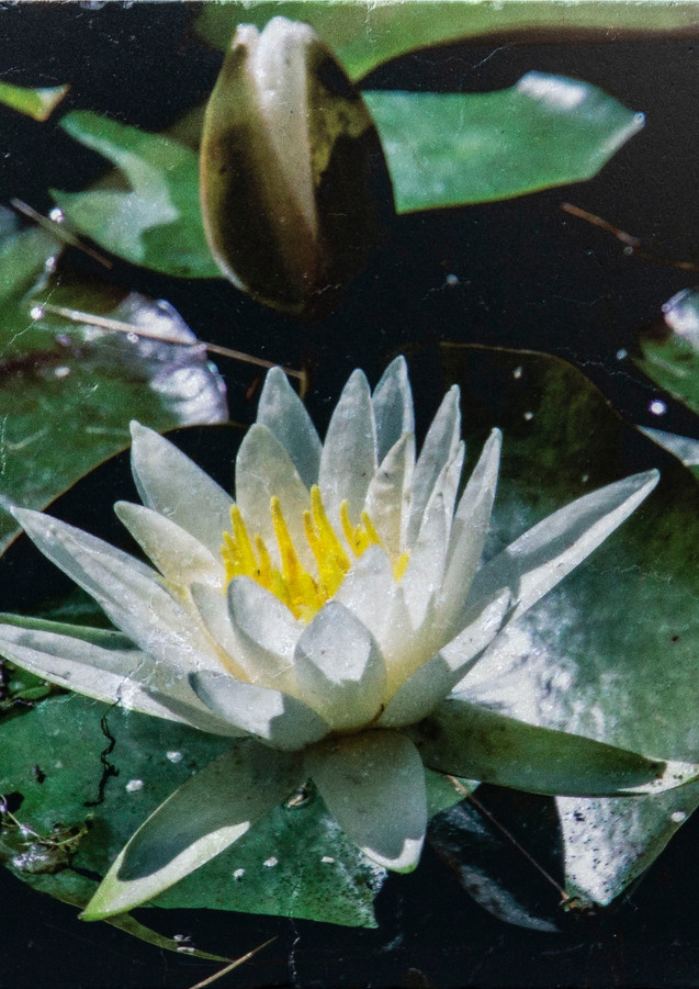 lily pad on marble.jpg