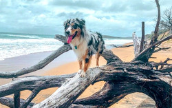 Agnes water dog accomodation