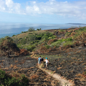 Bushwalks, Walkings Trails & Tracks not to miss while holidaying in Agnes Water & 1770