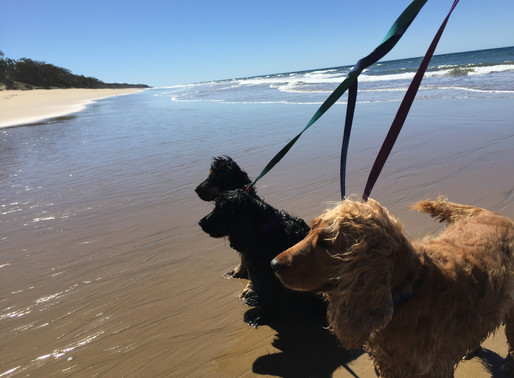 The Best 5 Dog Friendly Beaches in Agnes Water & 1770