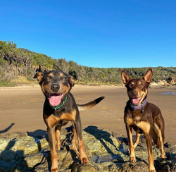 Agnes Water dog beach