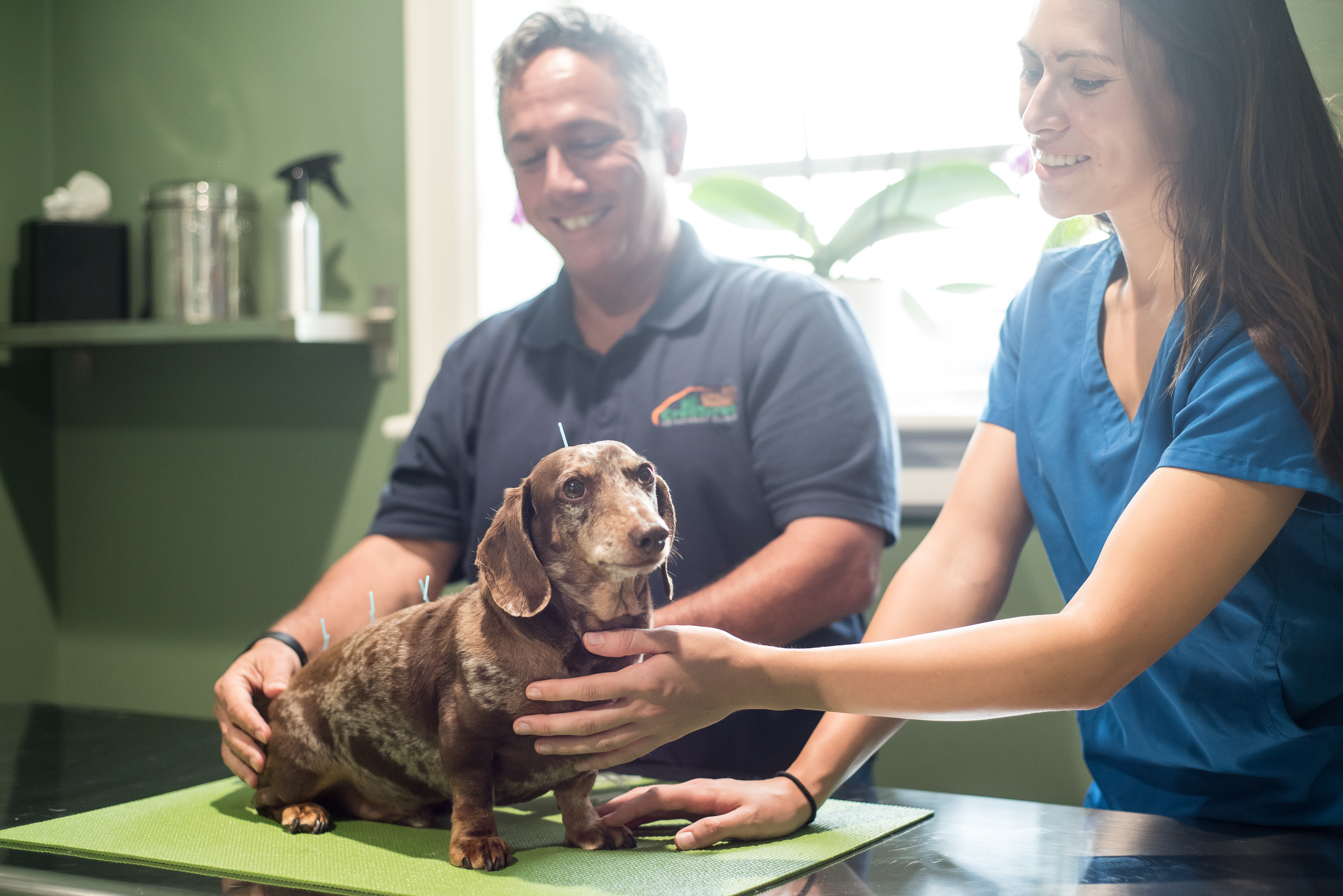 All Creatures Veterinary Charleston South Carolina 6
