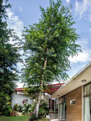 casa entre árvores