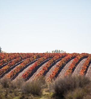 vineyard-1030952_1920.jpg
