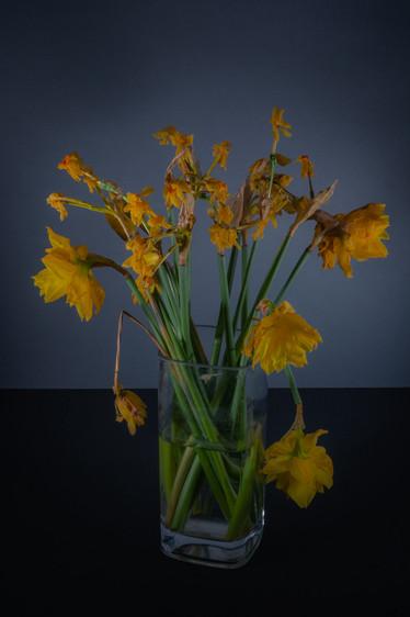 tulip diary-3.jpg