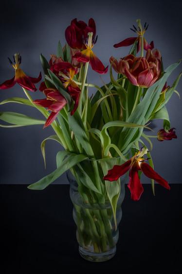 tulip diary-2.jpg