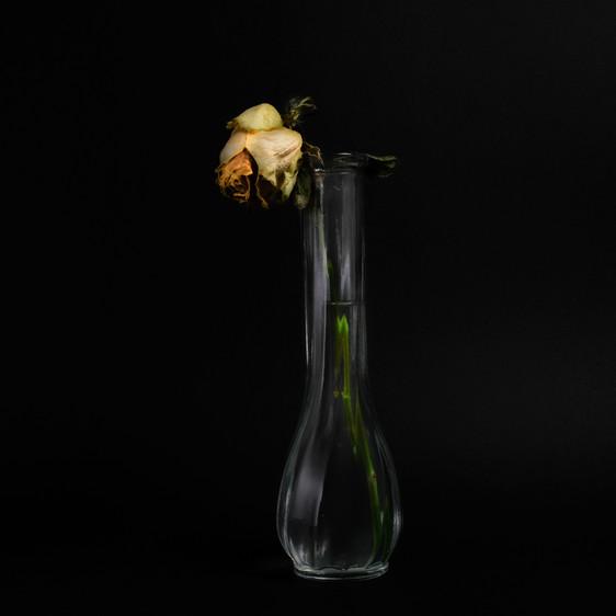 Rose-1-4.jpg