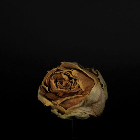 Rotating rose-1.jpg
