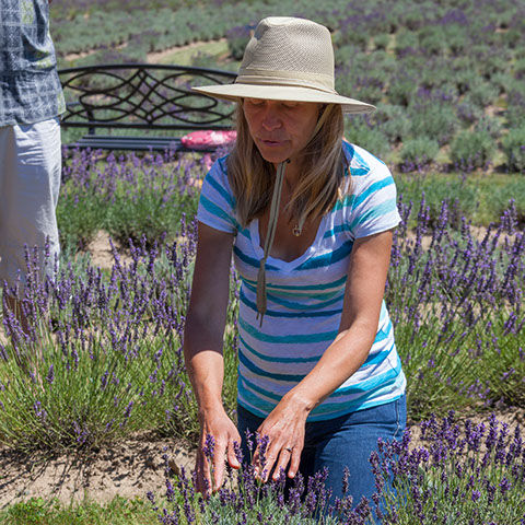 Women kneeing before lavender plant