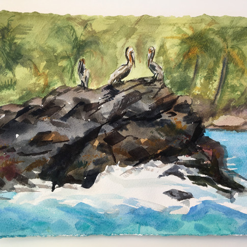 Pelicans on a Rock