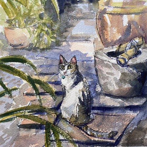 Secret Cat Garden
