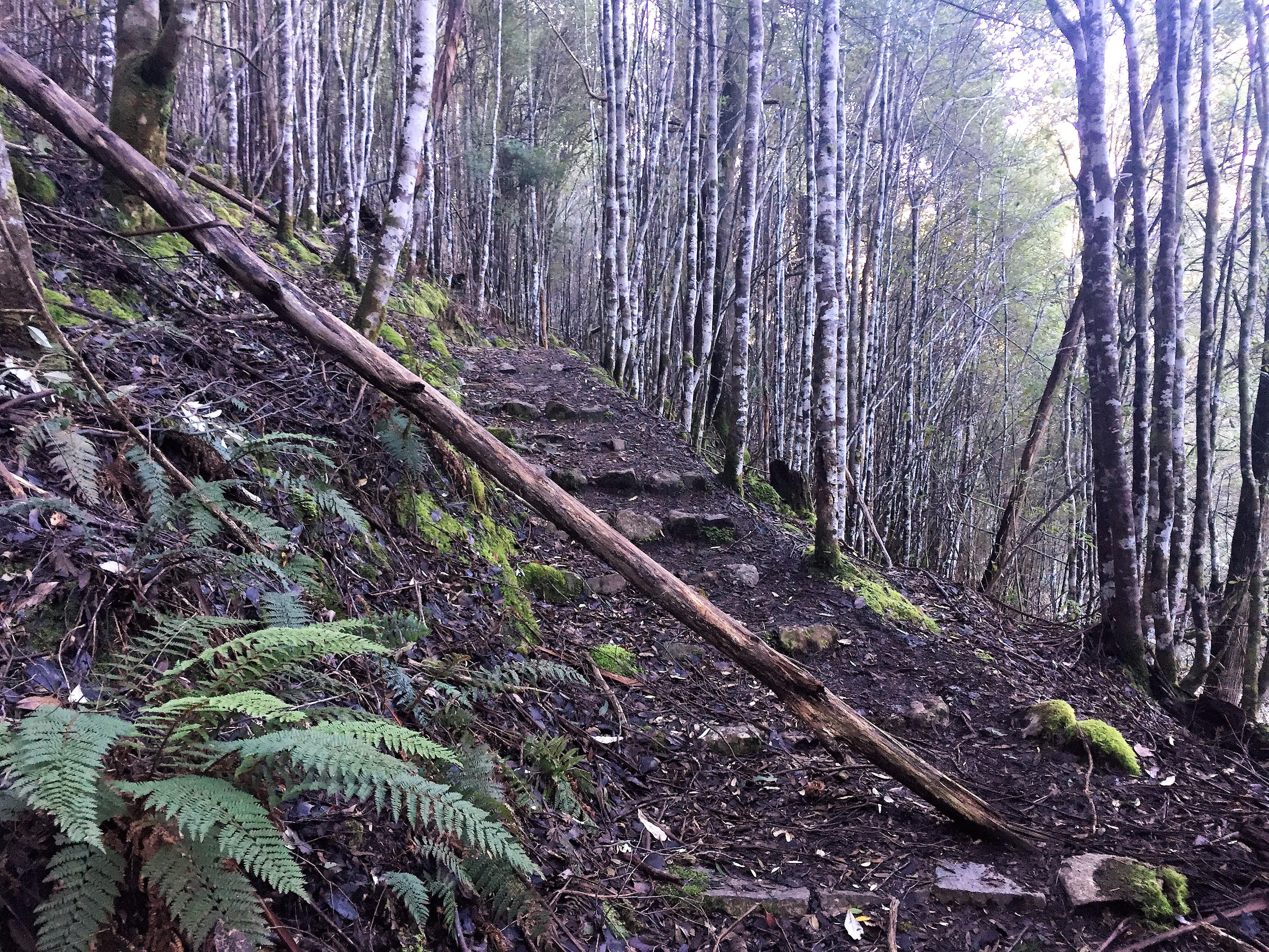 Fallen trees, Marriot Falls