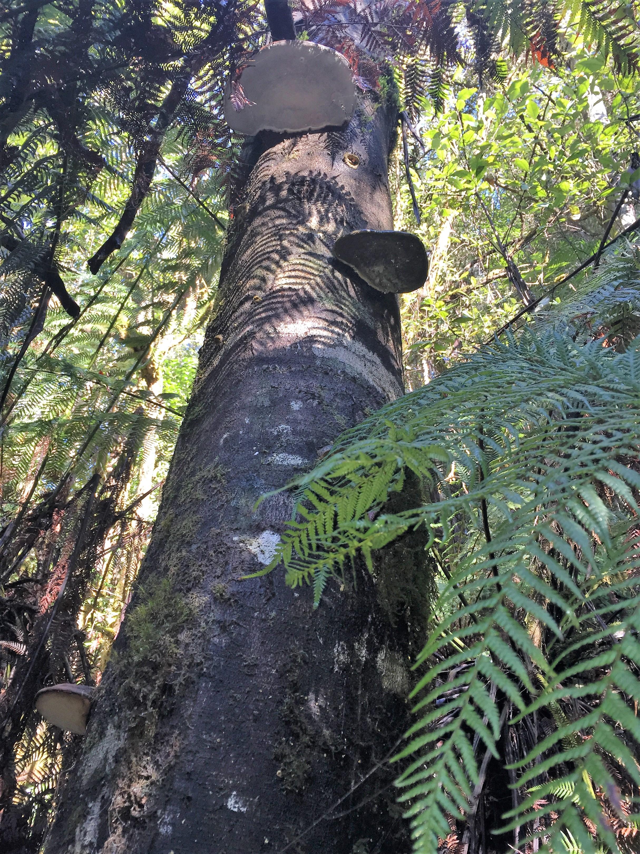 Fungi, Marriot Falls