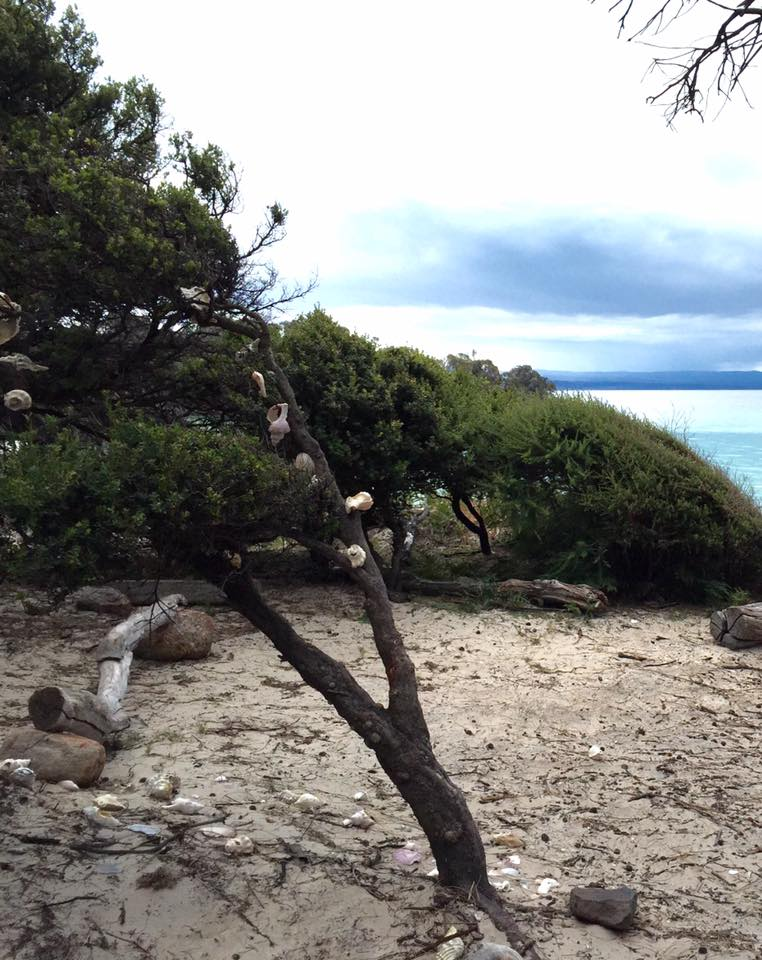 At Cooks Beach campground we found a true Aussie Christmas Tree - Freycinet Circuit