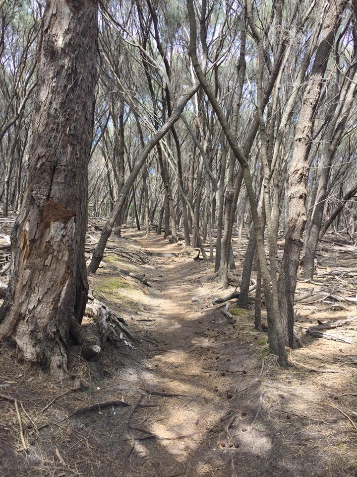 Walking through the mystical woods - Freycinet Circuit